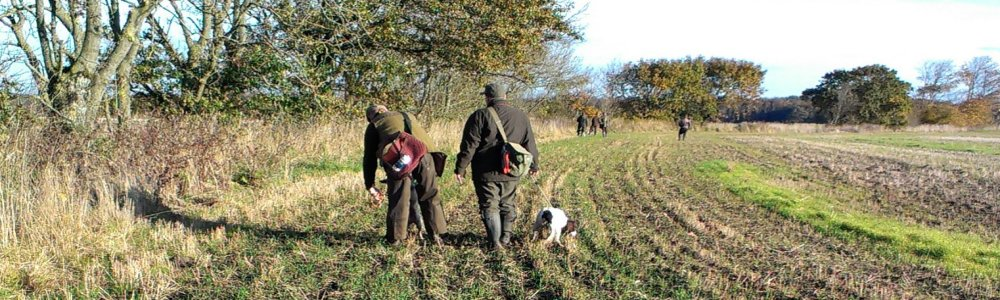 Ryebrook Gundogs